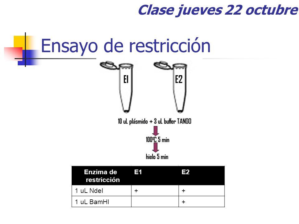 Ensayo de restricción Enzima de restricción E1E2 1 uL NdeI++ 1 uL BamHI+ Clase jueves 22 octubre