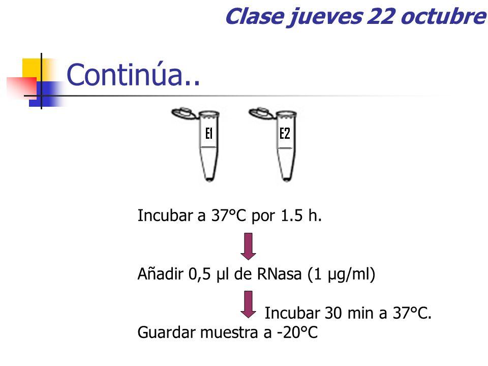 Continúa.. Incubar a 37°C por 1.5 h. Añadir 0,5 μl de RNasa (1 μg/ml) Incubar 30 min a 37°C. Guardar muestra a -20°C Clase jueves 22 octubre