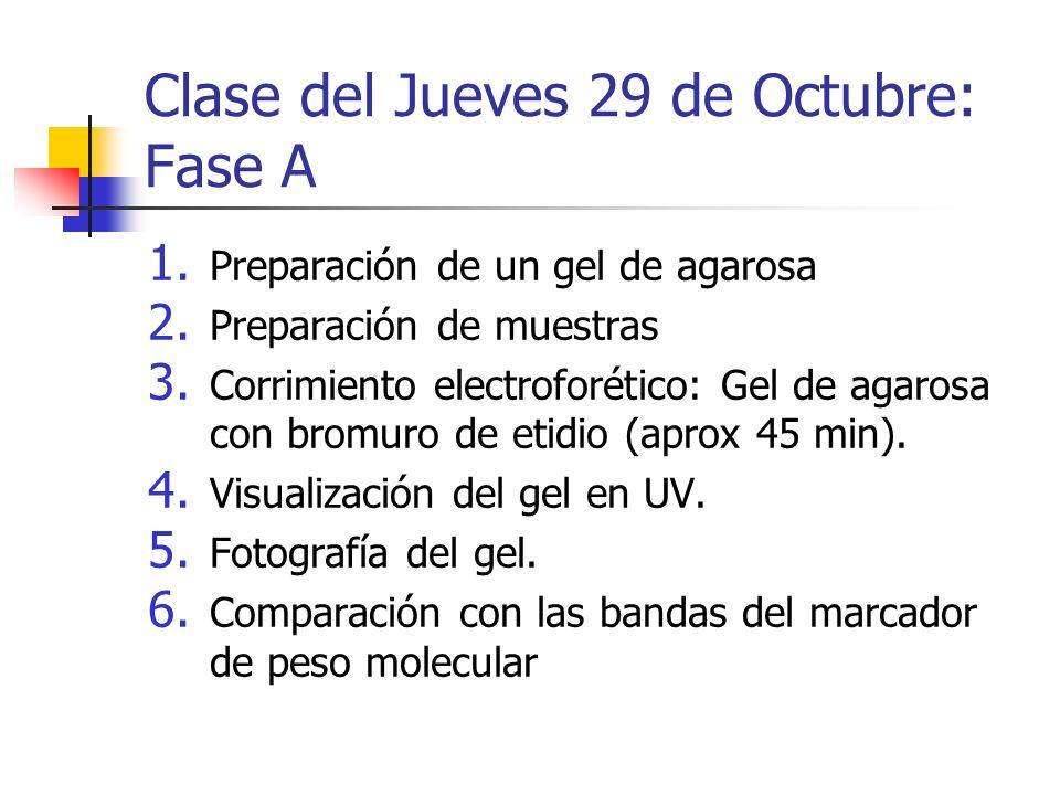 Clase del Jueves 29 de Octubre: Fase A 1. Preparación de un gel de agarosa 2. Preparación de muestras 3. Corrimiento electroforético: Gel de agarosa c