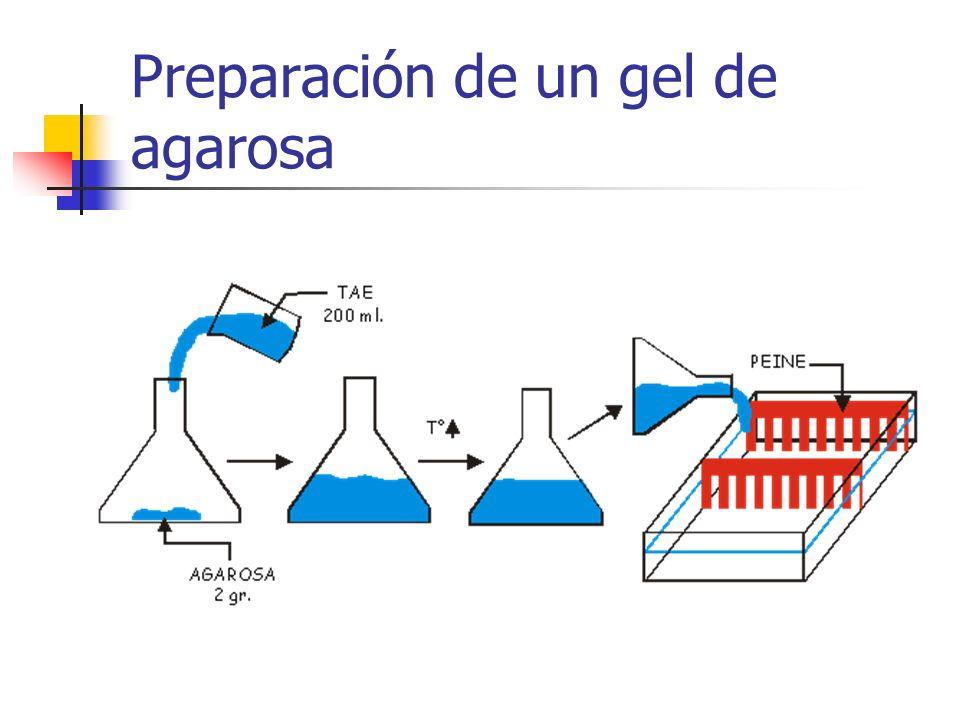 Preparación de un gel de agarosa