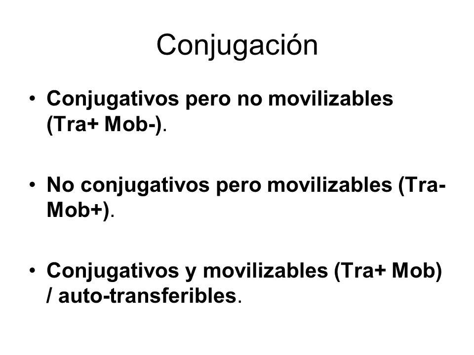 Conjugación Conjugativos pero no movilizables (Tra+ Mob-). No conjugativos pero movilizables (Tra- Mob+). Conjugativos y movilizables (Tra+ Mob) / aut