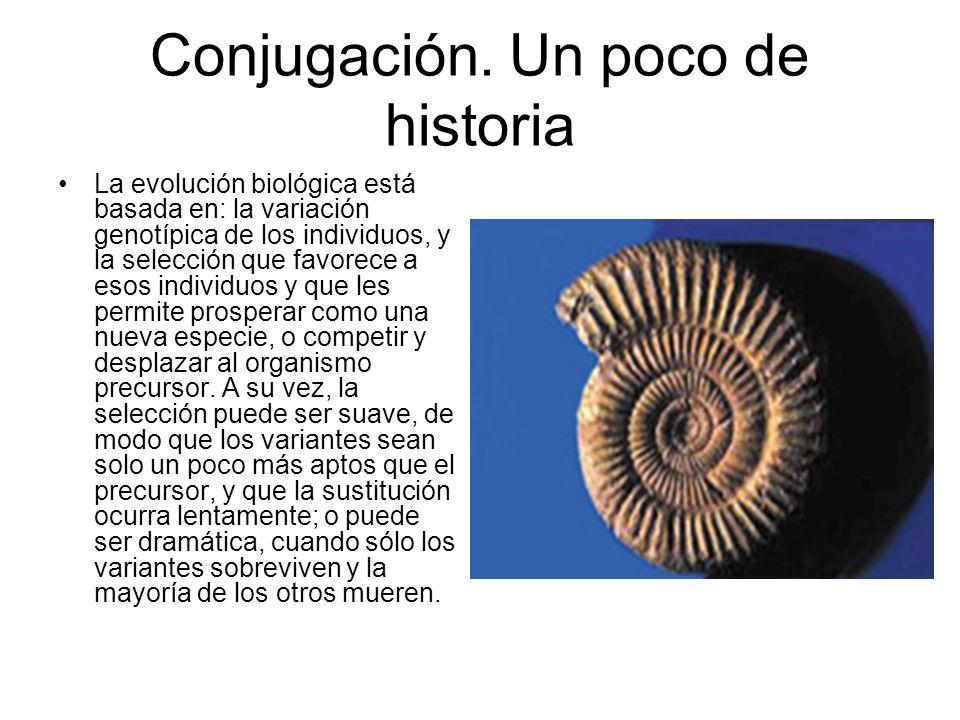 Conjugación. Un poco de historia La evolución biológica está basada en: la variación genotípica de los individuos, y la selección que favorece a esos