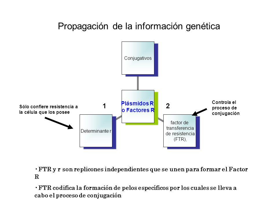 Propagación de la información genética Plásmidos R o Factores R Conjugativos factor de transferencia de resistencia (FTR), Determinante r Controla el