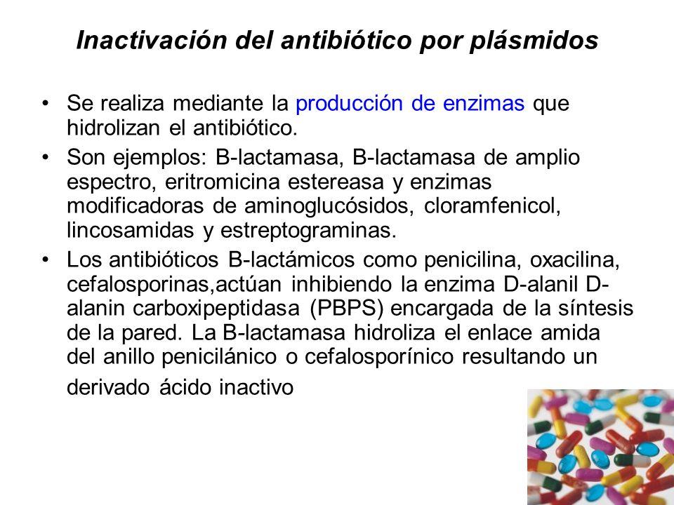 Inactivación del antibiótico por plásmidos Se realiza mediante la producción de enzimas que hidrolizan el antibiótico. Son ejemplos: B-lactamasa, B-la