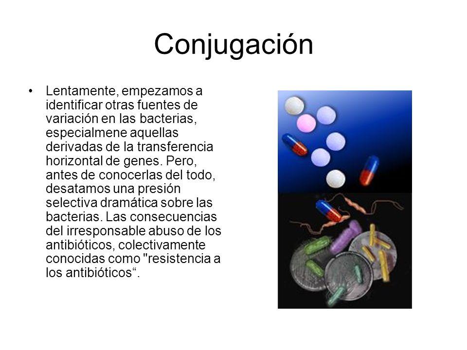 Conjugación Lentamente, empezamos a identificar otras fuentes de variación en las bacterias, especialmene aquellas derivadas de la transferencia horiz