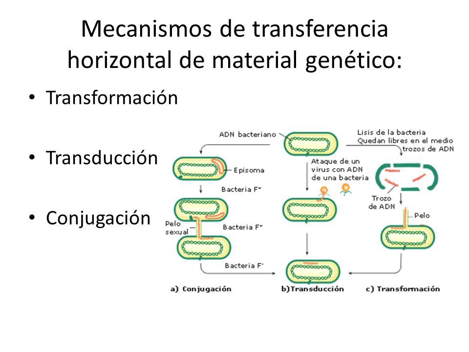 Transformación Transducción Conjugación Mecanismos de transferencia horizontal de material genético: