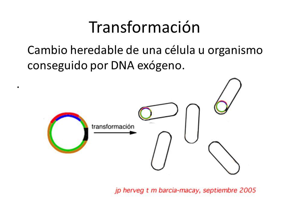 Transducción Transferencia de genes de una bacteria a otra mediada por virus, o la trasferencia de genes eucariotas mediada por retrovirus.