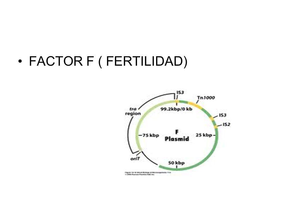 FACTOR F ( FERTILIDAD)