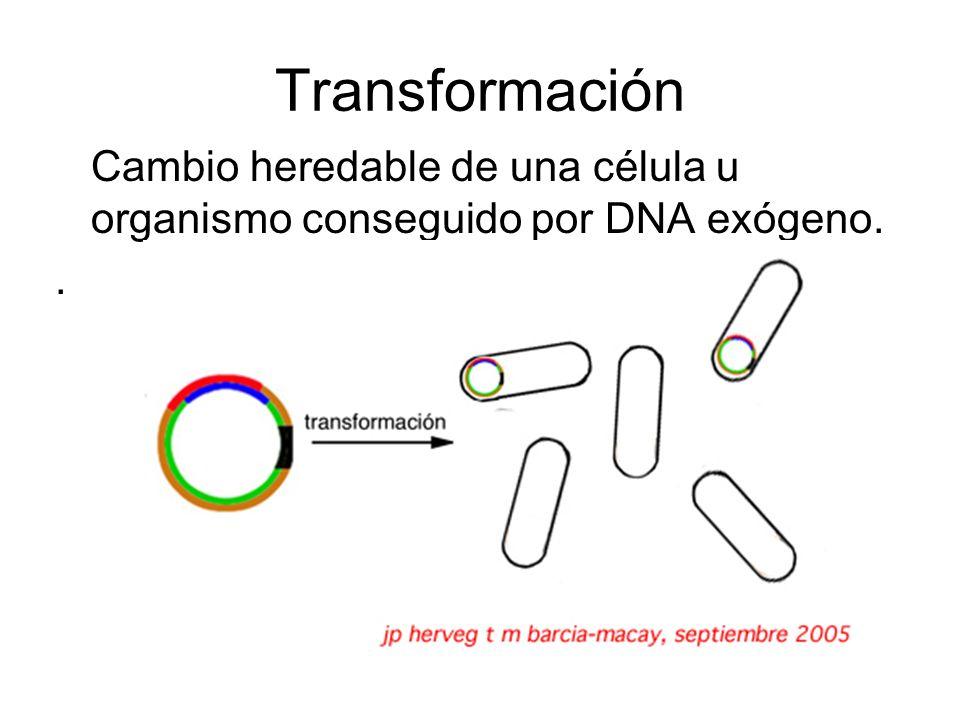 Cambio heredable de una célula u organismo conseguido por DNA exógeno.. Transformación