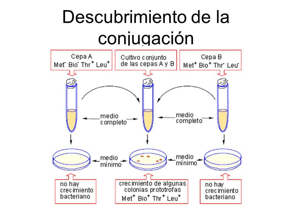 Necesidad de contacto directo entre células