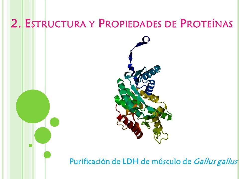2. E STRUCTURA Y P ROPIEDADES DE P ROTEÍNAS Purificación de LDH de músculo de Gallus gallus