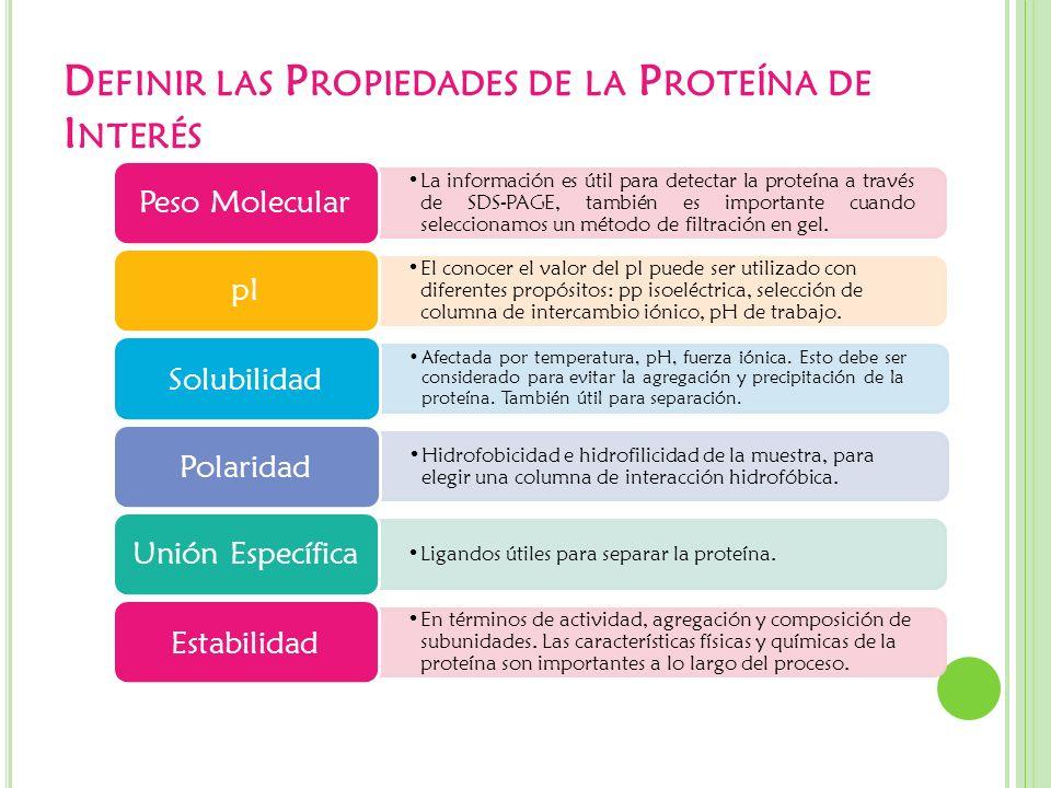 D EFINIR LAS P ROPIEDADES DE LA P ROTEÍNA DE I NTERÉS La información es útil para detectar la proteína a través de SDS-PAGE, también es importante cua
