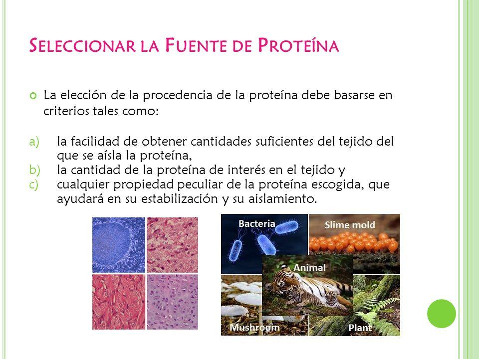 S ELECCIONAR LA F UENTE DE P ROTEÍNA La elección de la procedencia de la proteína debe basarse en criterios tales como: a)la facilidad de obtener cant