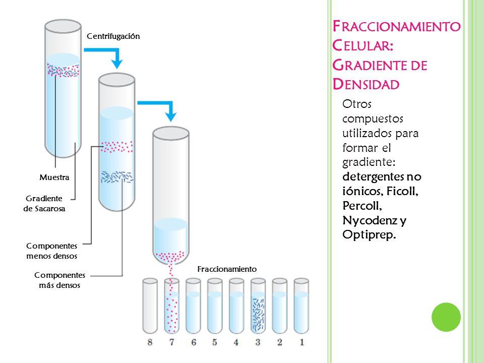 F RACCIONAMIENTO C ELULAR : G RADIENTE DE D ENSIDAD Otros compuestos utilizados para formar el gradiente: detergentes no iónicos, Ficoll, Percoll, Nyc