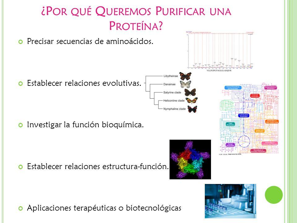 ¿P OR QUÉ Q UEREMOS P URIFICAR UNA P ROTEÍNA ? Precisar secuencias de aminoácidos. Establecer relaciones evolutivas. Investigar la función bioquímica.