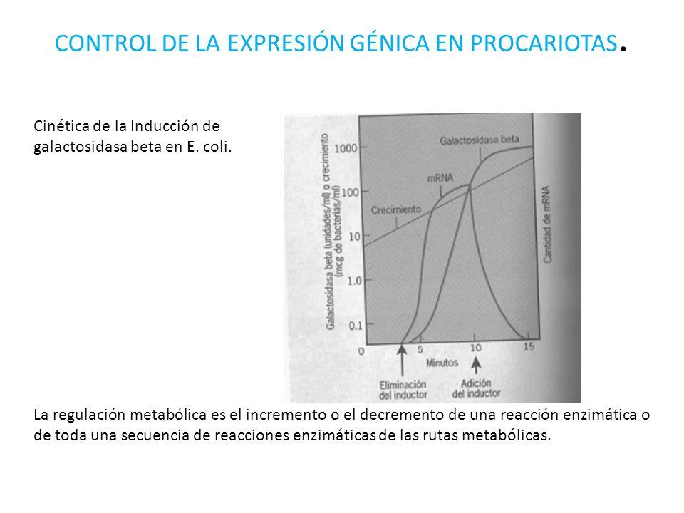 CONTROL DE LA EXPRESIÓN GÉNICA EN PROCARIOTAS. Cinética de la Inducción de galactosidasa beta en E. coli. La regulación metabólica es el incremento o