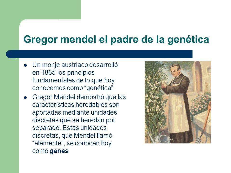 Gregor mendel el padre de la genética Un monje austriaco desarrolló en 1865 los principios fundamentales de lo que hoy conocemos como genética.