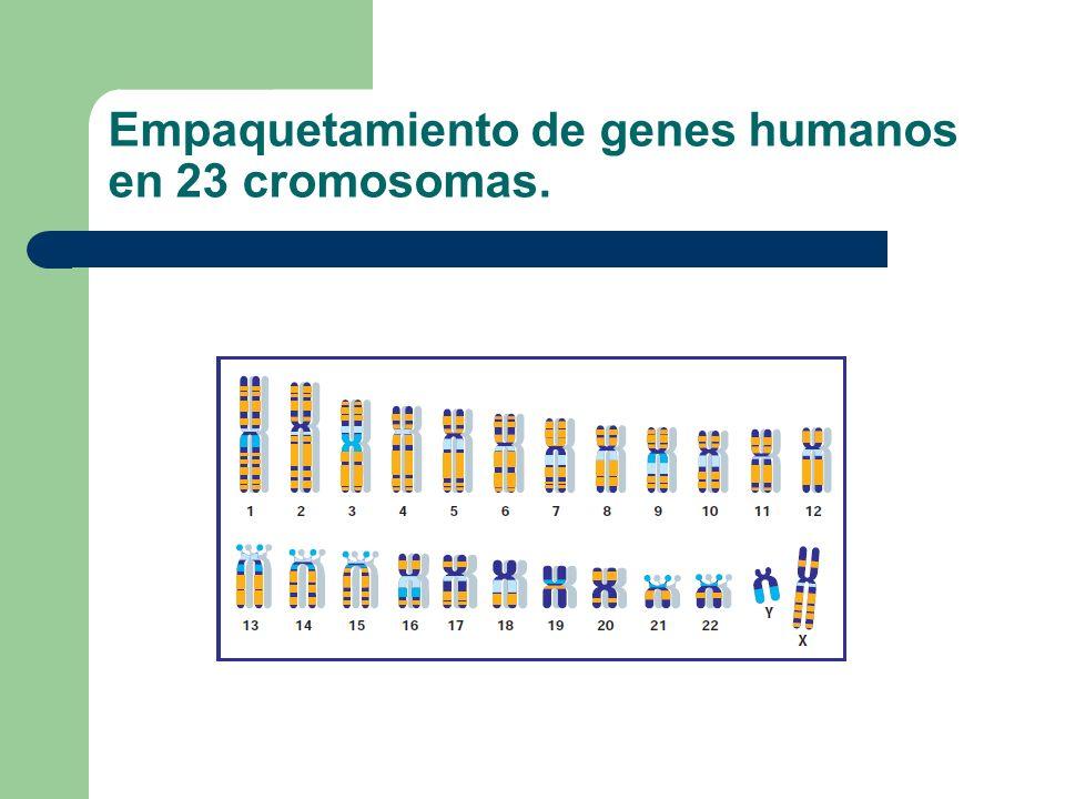 Probabilidad y herencia Es más correcto expresar las frecuencias genéticas como probabilidades. El rango de probabilidad va desde: 0, si es seguro que