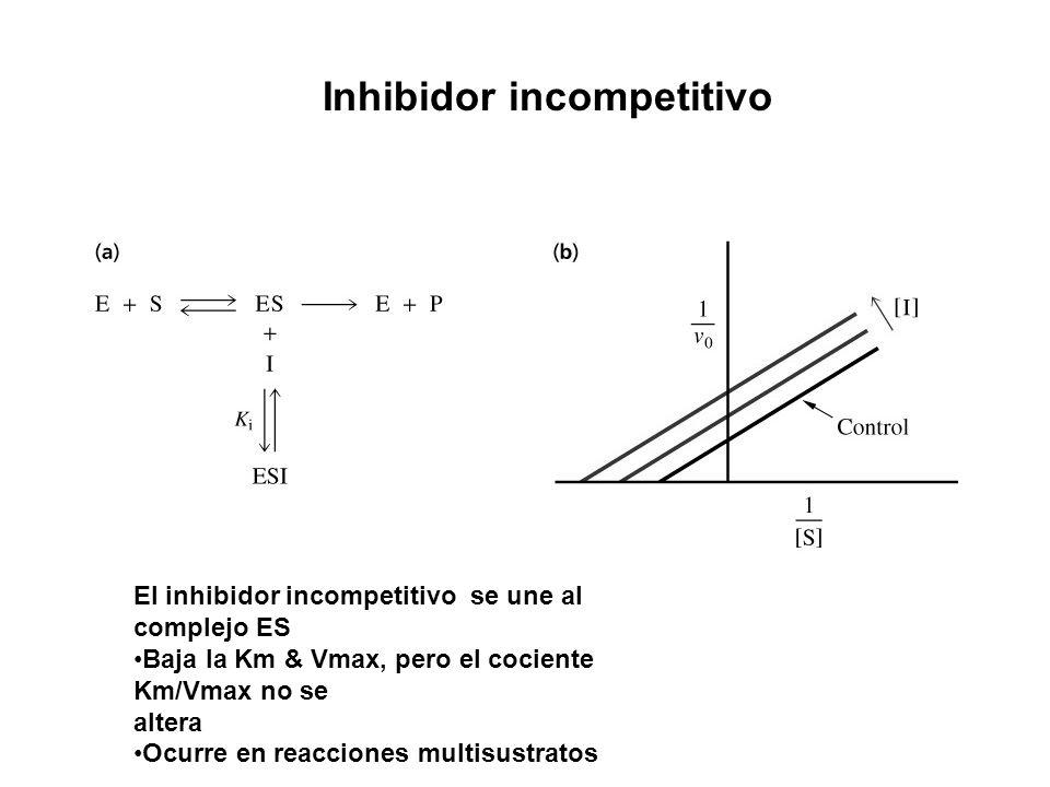 Inhibidor incompetitivo El inhibidor incompetitivo se une al complejo ES Baja la Km & Vmax, pero el cociente Km/Vmax no se altera Ocurre en reacciones