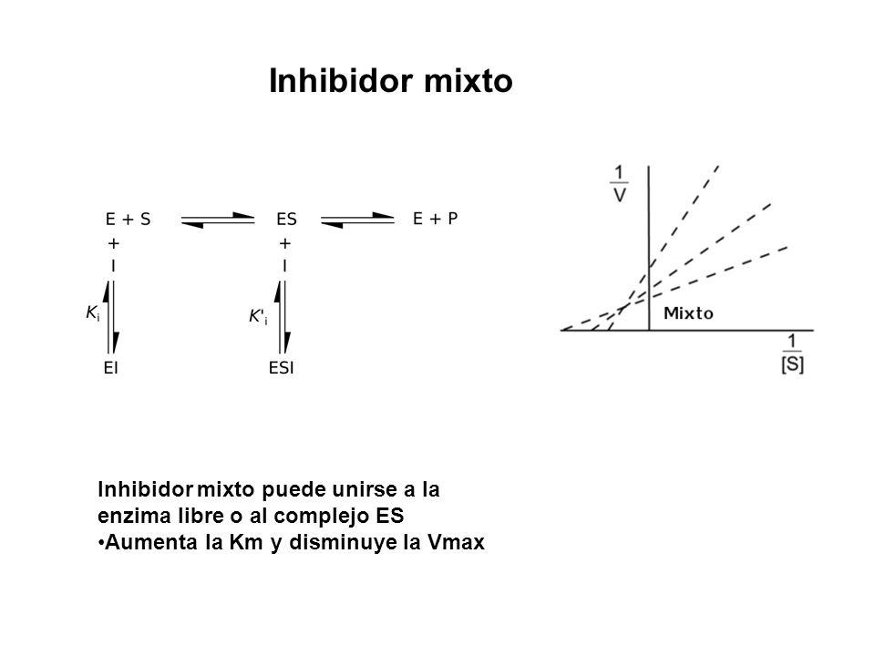 Inhibidor mixto Inhibidor mixto puede unirse a la enzima libre o al complejo ES Aumenta la Km y disminuye la Vmax