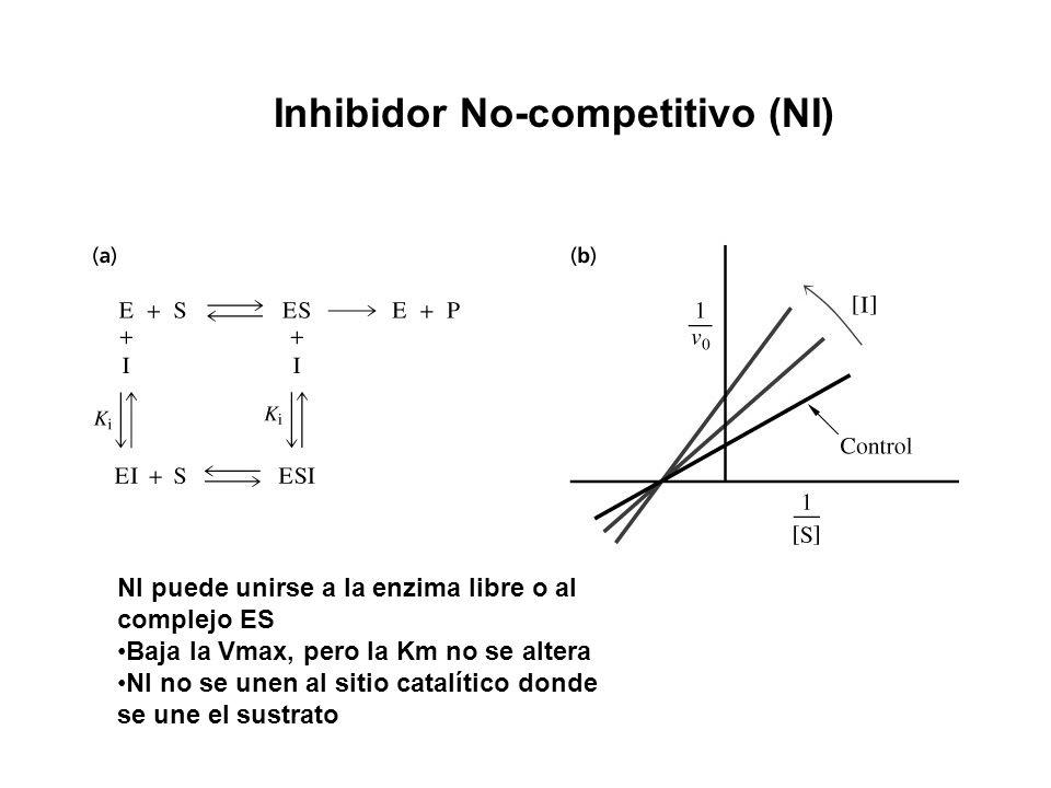 Inhibidor No-competitivo (NI) NI puede unirse a la enzima libre o al complejo ES Baja la Vmax, pero la Km no se altera NI no se unen al sitio catalíti
