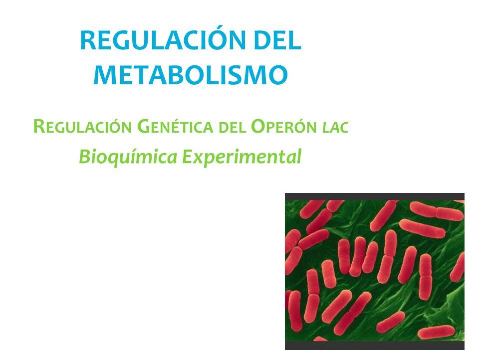 REGULACIÓN DEL METABOLISMO R EGULACIÓN G ENÉTICA DEL O PERÓN LAC Bioquímica Experimental