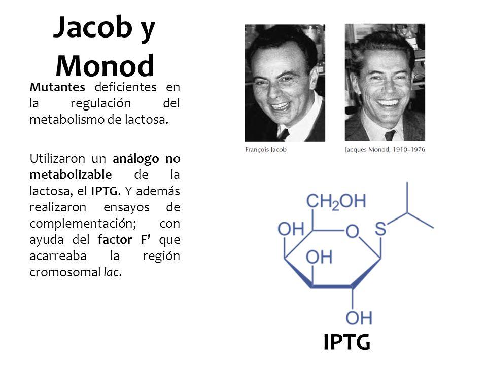 Jacob y Monod Mutantes deficientes en la regulación del metabolismo de lactosa. Utilizaron un análogo no metabolizable de la lactosa, el IPTG. Y ademá