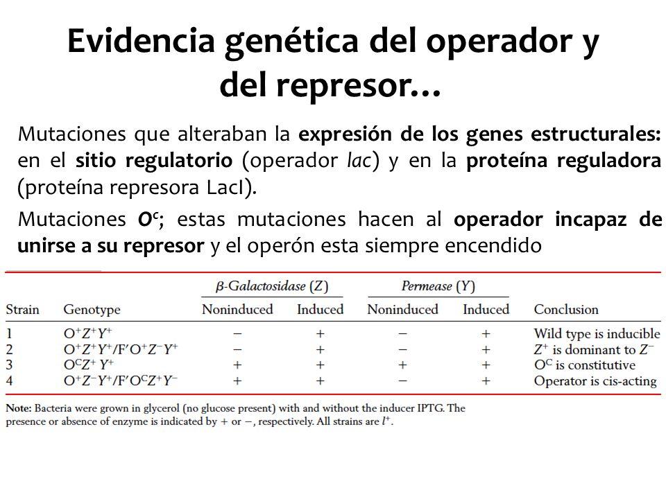 Evidencia genética del operador y del represor… Mutaciones que alteraban la expresión de los genes estructurales: en el sitio regulatorio (operador la