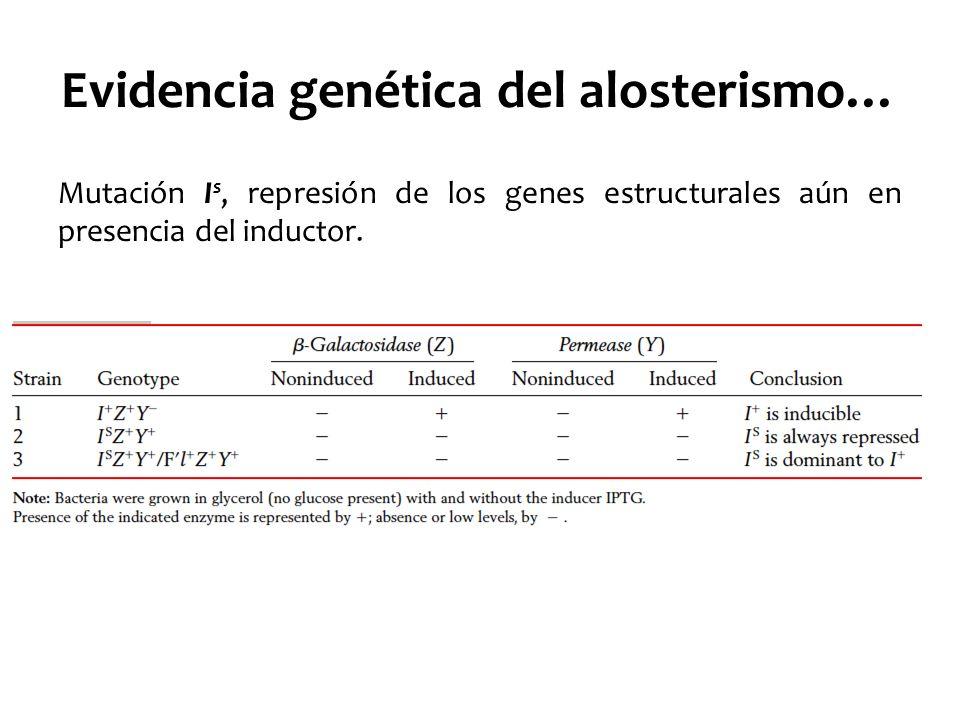 Evidencia genética del alosterismo… Mutación I s, represión de los genes estructurales aún en presencia del inductor.