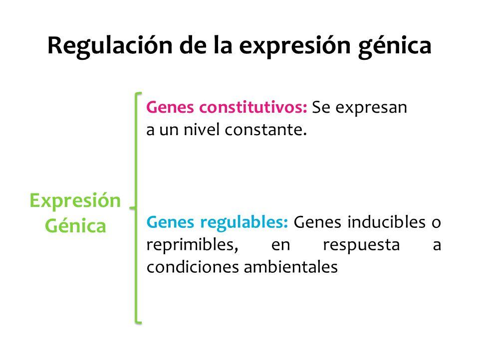 ¿A qué nivel se regula la expresión génica.
