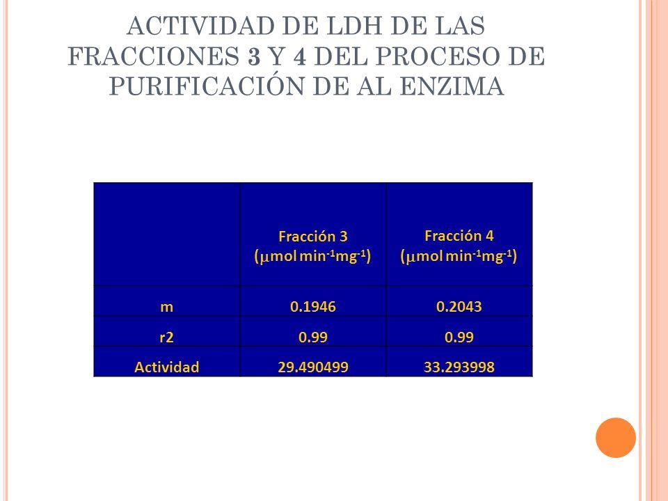 ACTIVIDAD DE LDH DE LAS FRACCIONES 3 Y 4 DEL PROCESO DE PURIFICACIÓN DE AL ENZIMA Fracción 3 ( mol min -1 mg -1 ) Fracción 4 ( mol min -1 mg -1 ) m0.1
