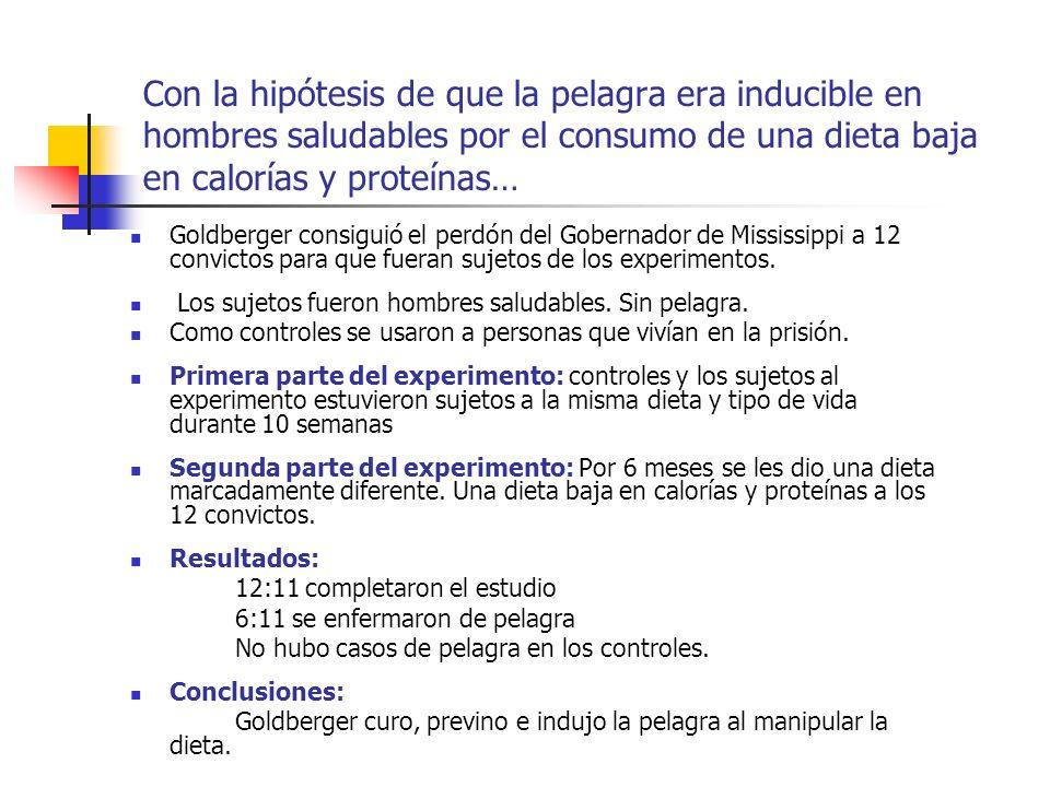 Con la hipótesis de que la pelagra era inducible en hombres saludables por el consumo de una dieta baja en calorías y proteínas… Goldberger consiguió