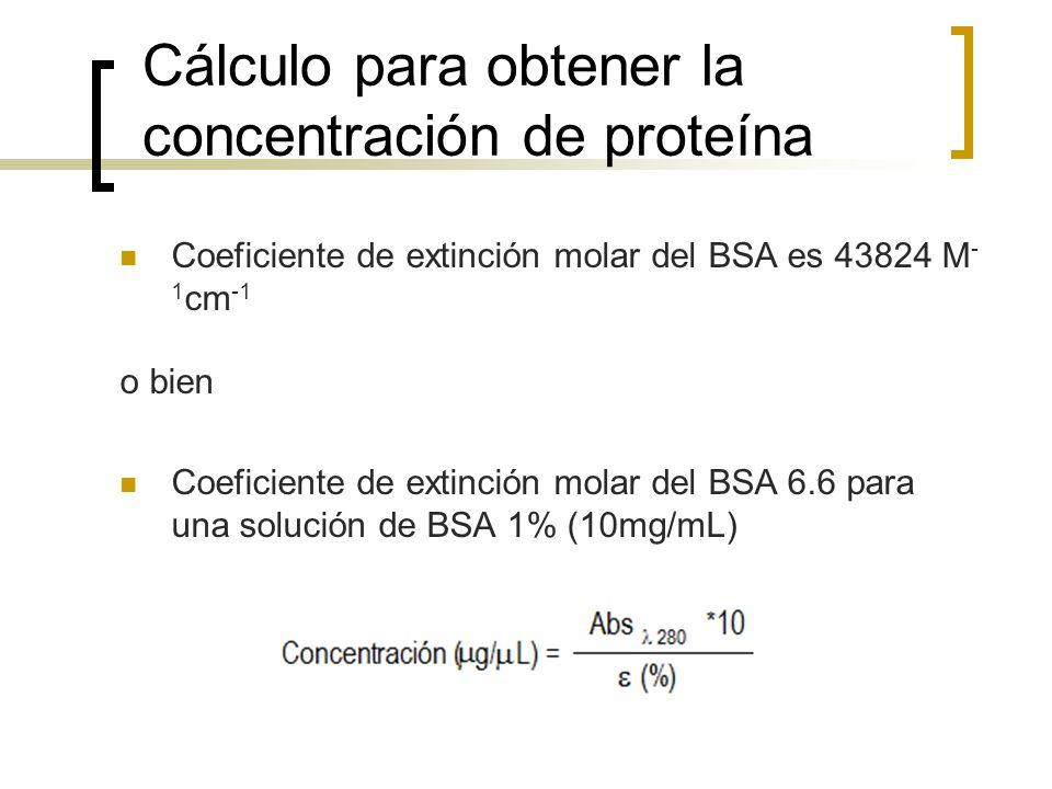 Cálculo para obtener la concentración de proteína Coeficiente de extinción molar del BSA es 43824 M - 1 cm -1 o bien Coeficiente de extinción molar de