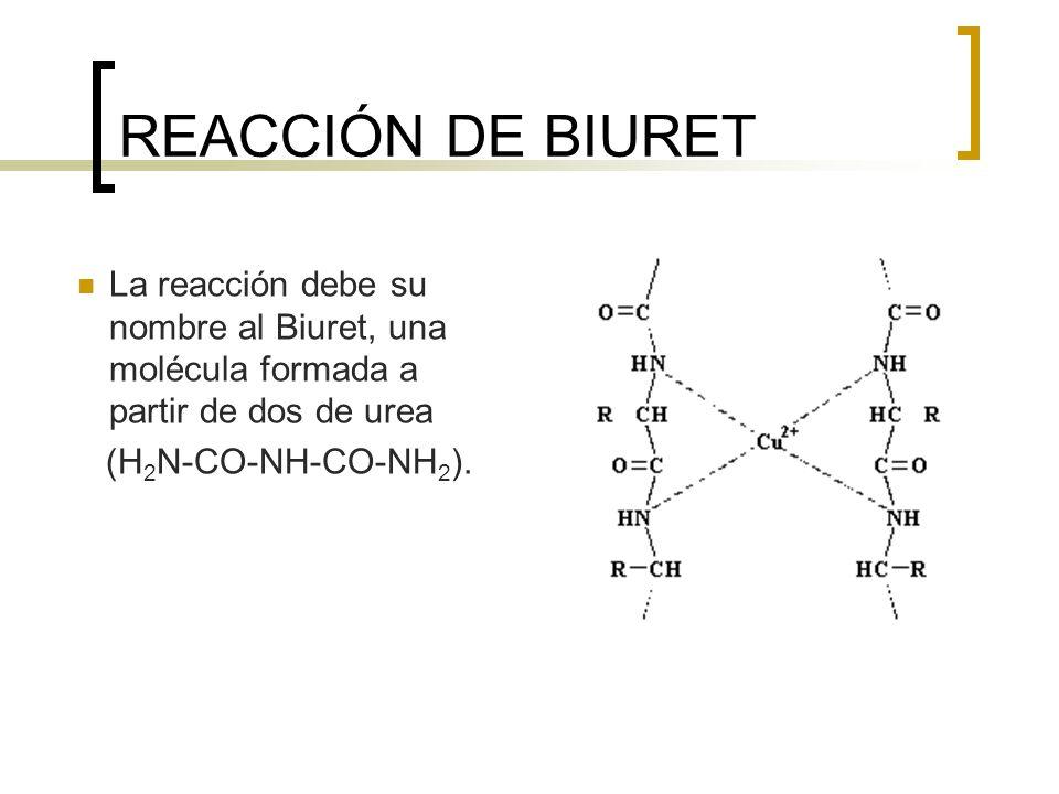 REACCIÓN DE BIURET La reacción debe su nombre al Biuret, una molécula formada a partir de dos de urea (H 2 N-CO-NH-CO-NH 2 ).
