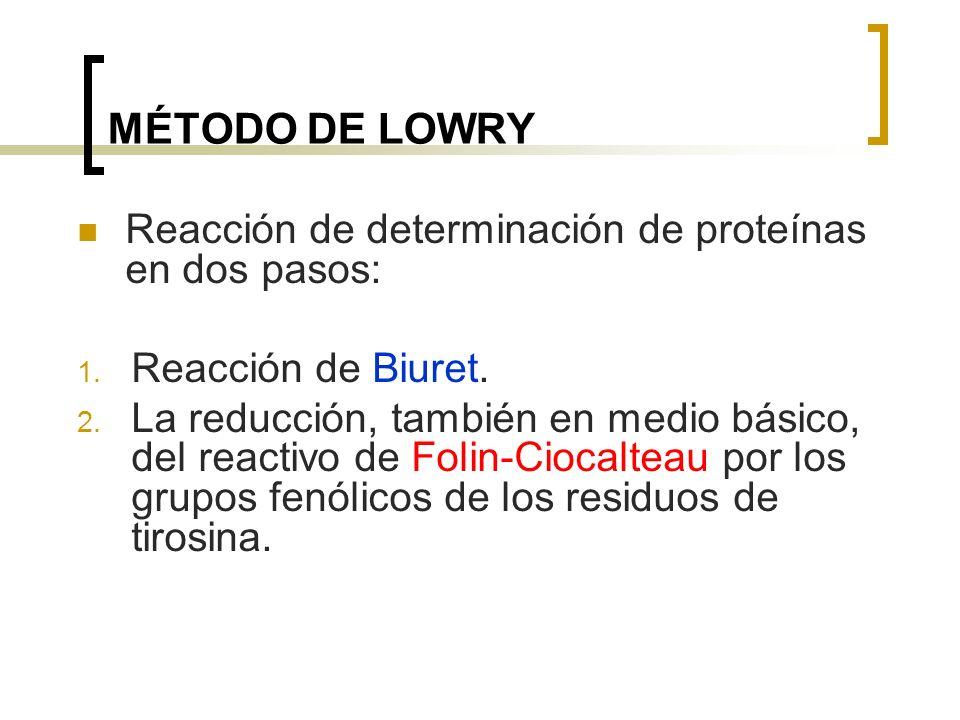 MÉTODO DE LOWRY Reacción de determinación de proteínas en dos pasos: 1. Reacción de Biuret. 2. La reducción, también en medio básico, del reactivo de