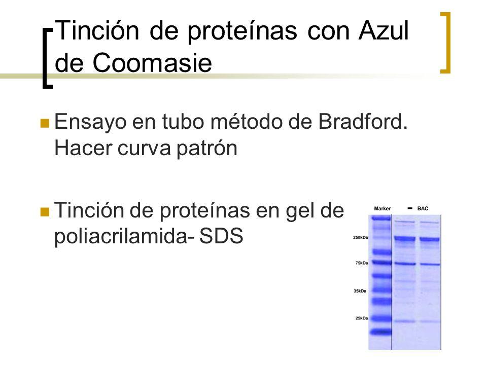 Tinción de proteínas con Azul de Coomasie Ensayo en tubo método de Bradford. Hacer curva patrón Tinción de proteínas en gel de poliacrilamida- SDS
