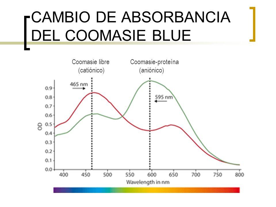 CAMBIO DE ABSORBANCIA DEL COOMASIE BLUE Coomasie libre Coomasie-proteína (catiónico) (aniónico)