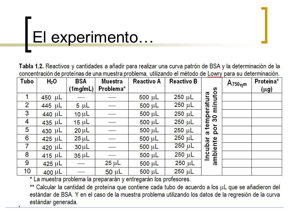 El experimento…