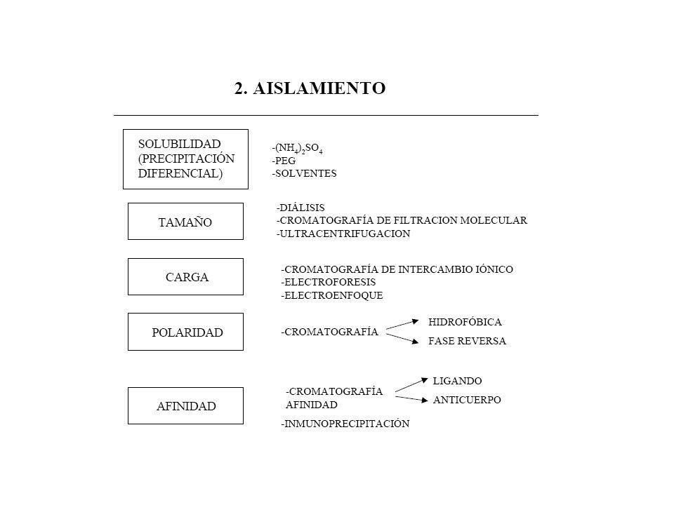 TÉCNICAS DE SEPARACIÓN DE PROTEÍNAS