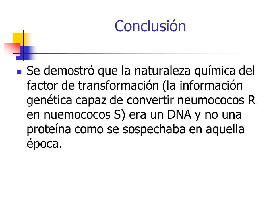 Conclusión Se demostró que la naturaleza química del factor de transformación (la información genética capaz de convertir neumococos R en nuemococos S