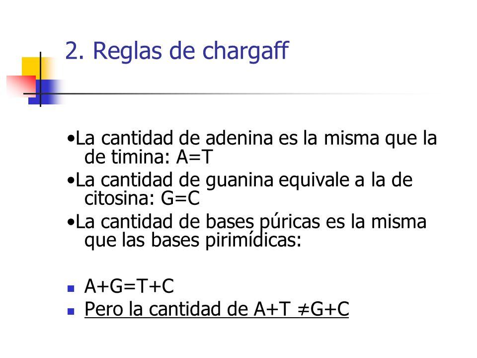 2. Reglas de chargaff La cantidad de adenina es la misma que la de timina: A=T La cantidad de guanina equivale a la de citosina: G=C La cantidad de ba
