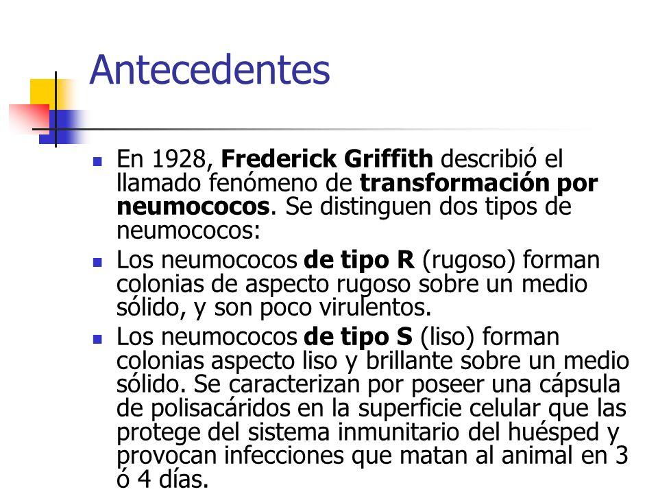 Antecedentes En 1928, Frederick Griffith describió el llamado fenómeno de transformación por neumococos. Se distinguen dos tipos de neumococos: Los ne