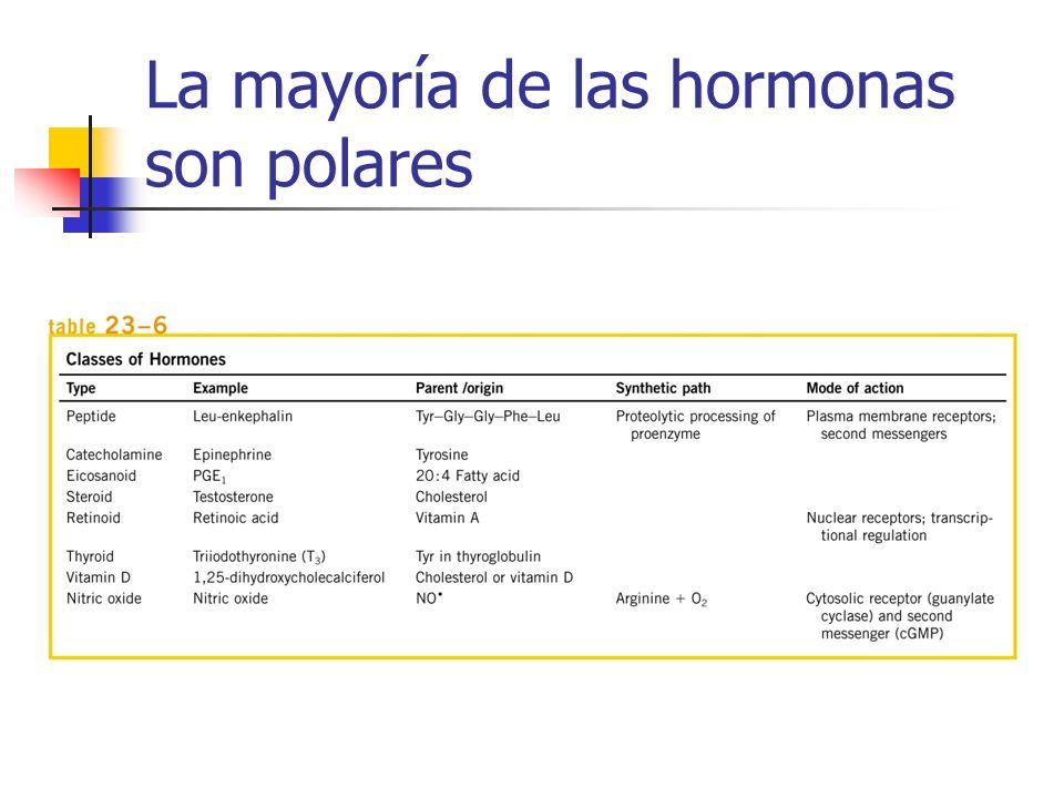 La mayoría de las hormonas son polares