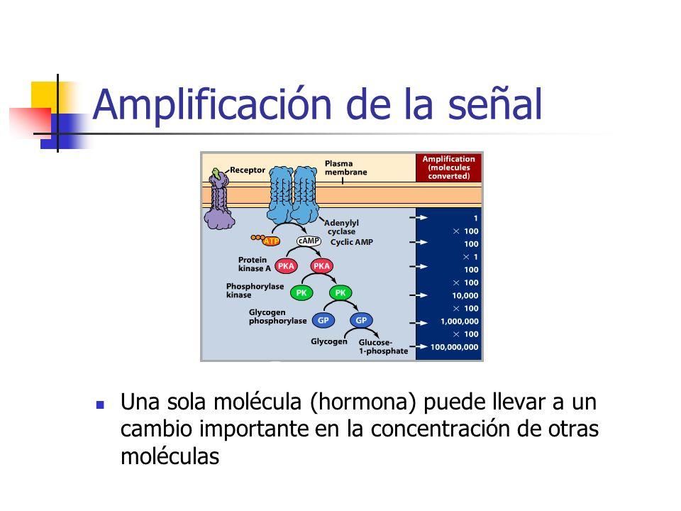 Amplificación de la señal Una sola molécula (hormona) puede llevar a un cambio importante en la concentración de otras moléculas