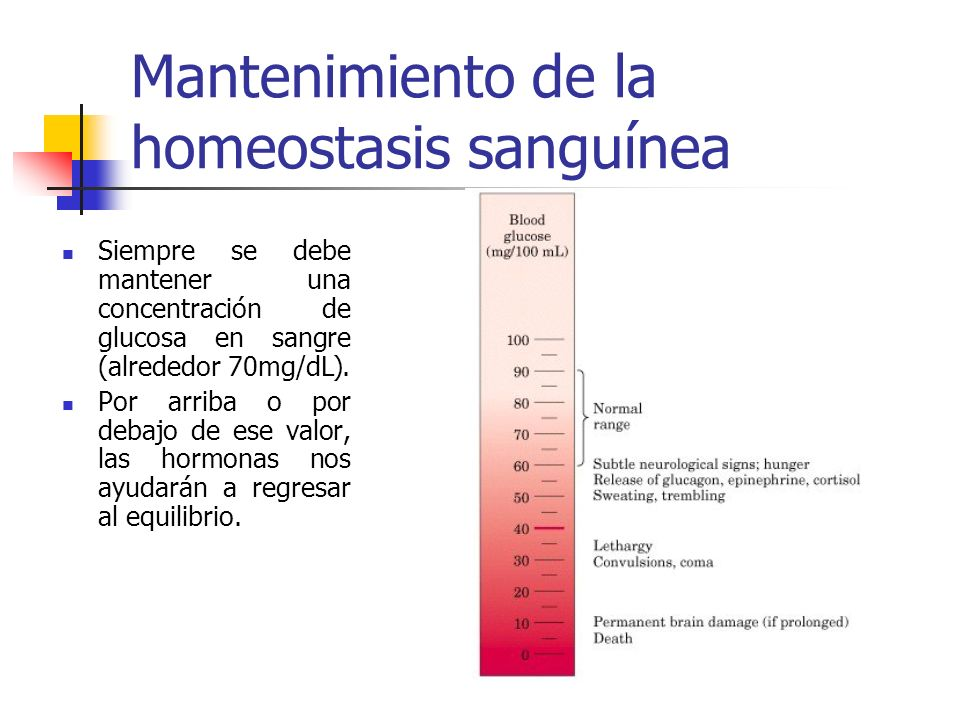 Mantenimiento de la homeostasis sanguínea Siempre se debe mantener una concentración de glucosa en sangre (alrededor 70mg/dL). Por arriba o por debajo