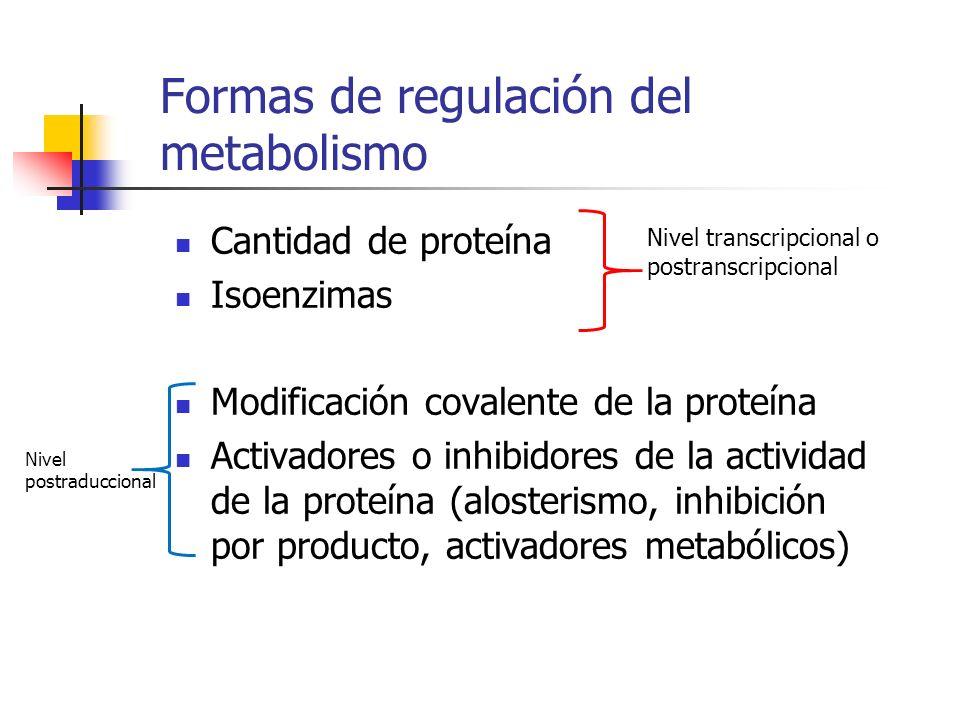 Formas de regulación del metabolismo Cantidad de proteína Isoenzimas Modificación covalente de la proteína Activadores o inhibidores de la actividad d