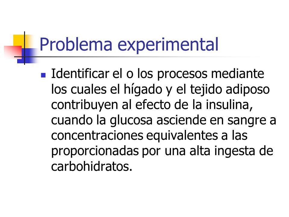 Problema experimental Identificar el o los procesos mediante los cuales el hígado y el tejido adiposo contribuyen al efecto de la insulina, cuando la