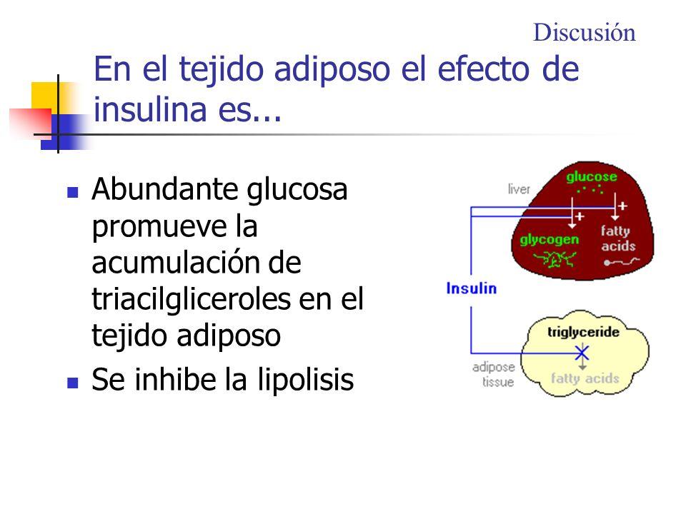 En el tejido adiposo el efecto de insulina es... Abundante glucosa promueve la acumulación de triacilgliceroles en el tejido adiposo Se inhibe la lipo