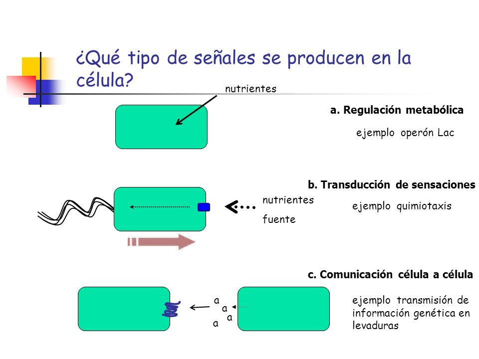 ¿Qué tipo de señales se producen en la célula? nutrientes a. Regulación metabólica ejemplo operón Lac b. Transducción de sensaciones nutrientes fuente