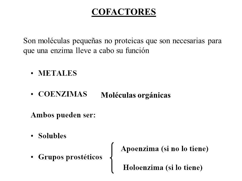Moléculas orgánicas COFACTORES Son moléculas pequeñas no proteicas que son necesarias para que una enzima lleve a cabo su función